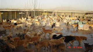 کانال+تلگرام+واگذاری+حیوانات+خانگی