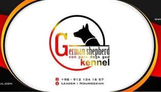 کانال تلگرام خرید سگ