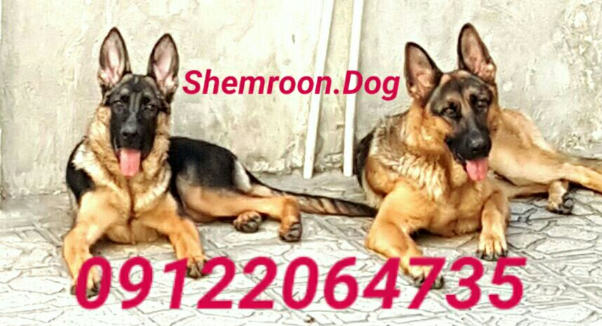 shemroon.dog