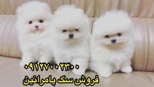 سگ فروشی